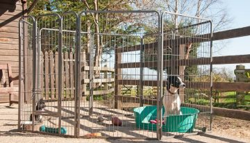 How To Choose The Best Outdoor Dog Kennel For Your Pet