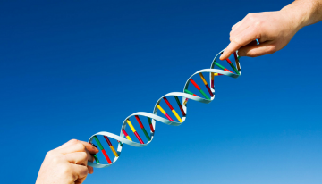 Know about your MTHFR gene and its mutations